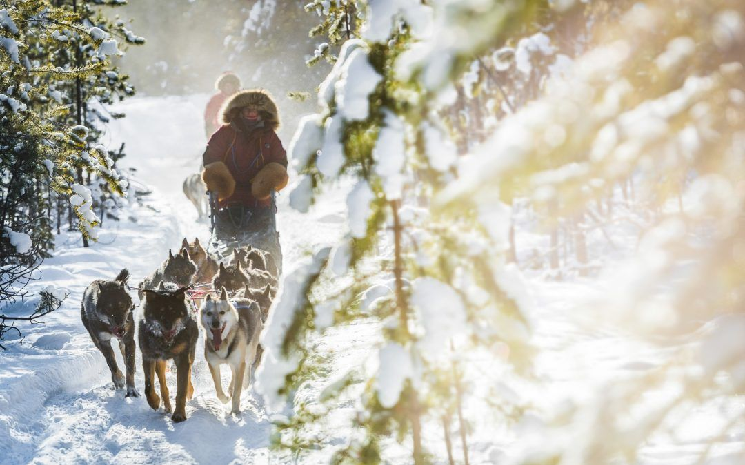 Canada: in the tracks ofThe Yukon Quest